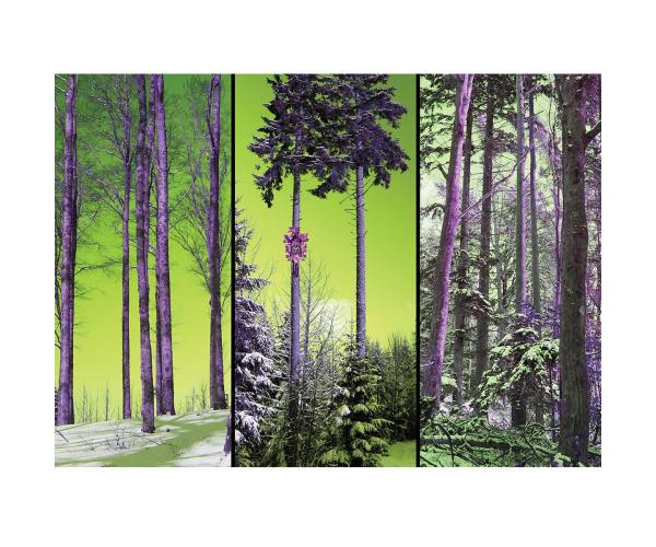Bild Kuckucksuhr mitten im Wald LP24