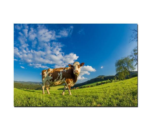 Fotodruck Schwarzwald Kuh auf Wiese